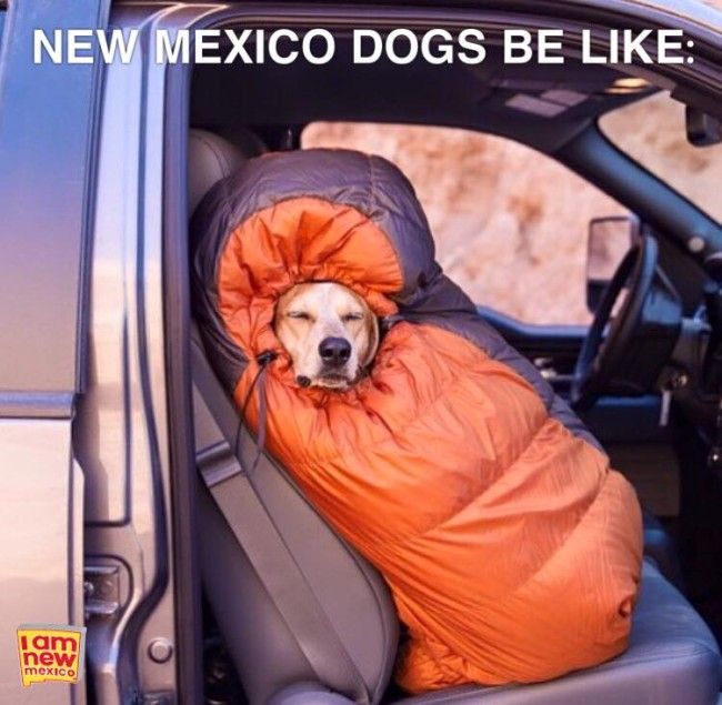 new mexico dogs be like